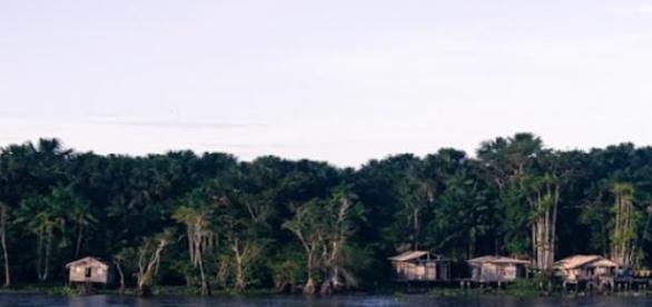 Los márgenes del Río Amazonas