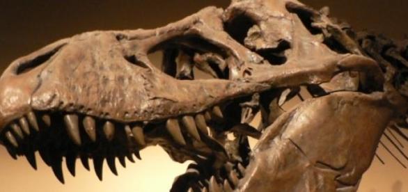 Tyrannosaurus Rex in Pariser Museum.