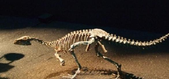 Uno de los primeros dinosaurios - CC-by K.Ohno