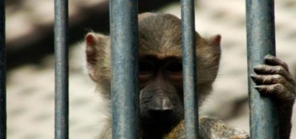 Czy w obecnych czasach zoo wciąż mają sens?