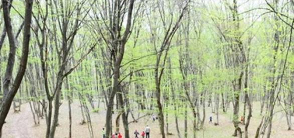 Ecologizarea lacului din satul Sălicea