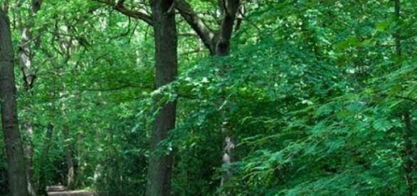 Długi weekend czerwcowy warto spędzić w lesie