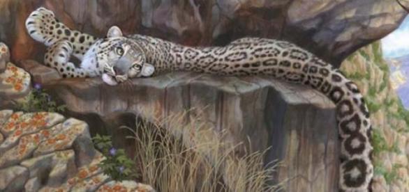 leopardul de zapada in habitatul sau natural
