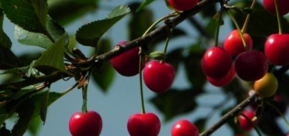 Sănătatea vine din natură