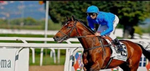 Dettori riding for Godolphin
