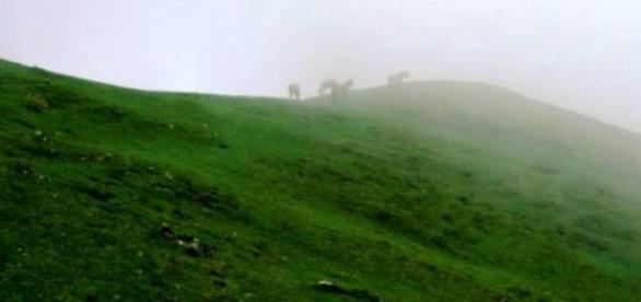 Entre la Selva y la Puna, el camino del Inca