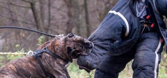 Patru câini de luptă au mâncat la propiu un bărbat