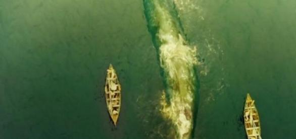 Baleia espetacular leva a pique navio no mar.