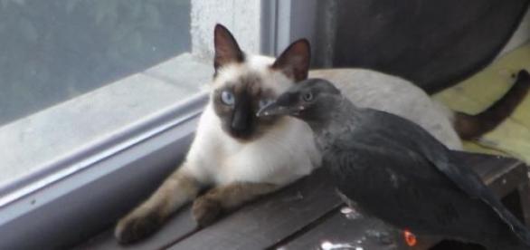 Stăncuţa Loki mănâncă alături de pisica Iris