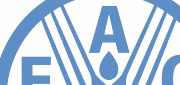 La FAO elige nuevamente a su Director-General