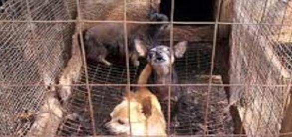 Miles de perros esperan su muerte en China