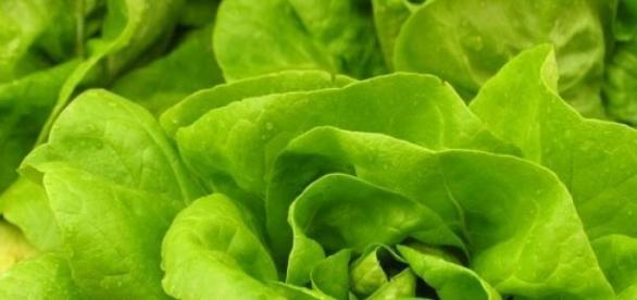 La lattuga, ingrediente della ricetta di oggi