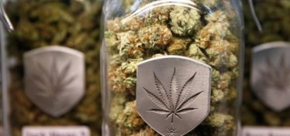 Legalizacja marihuany w Colorado