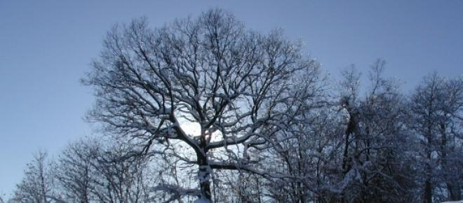 Invernos serão mais rigorosos durante dez anos