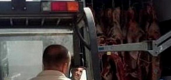 Carne apreendida após acidente de viação