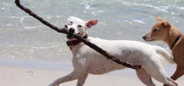 Hunde lieben das gemeinsame Spielen am Strand.