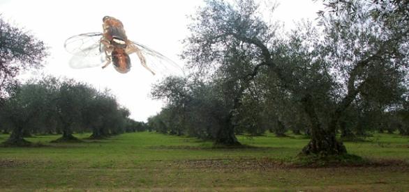 La mosca modificada, solución o problema
