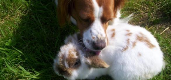 deux animaux qui cohabite parfaitement