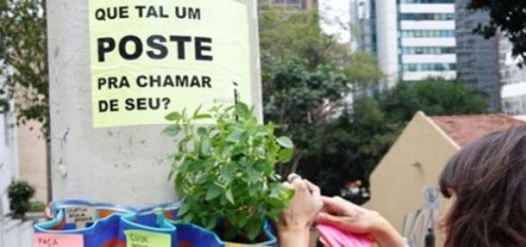 Coletivo Escala Humana plantando ervas nos postes