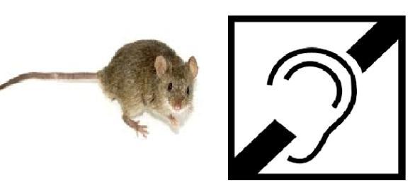 Se logró restituir audición en ratones con sordera
