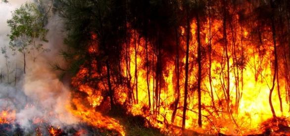 PJ deteve mais 2 suspeitos de incêndios florestais