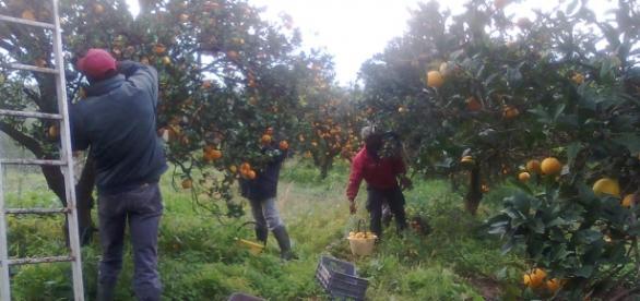 Un româm a murit în Italia, în agricultură
