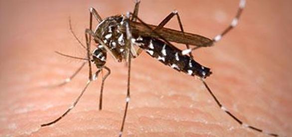Firenze, allerta per un caso di dengue