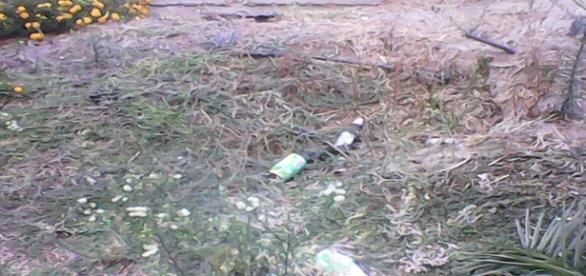 Lixo na Rua dos Arameiros, no jardim.