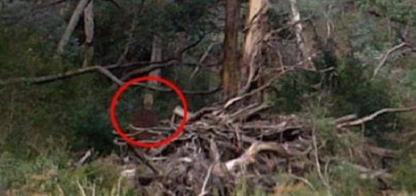 O siluetă a fost fotografiată în pădure