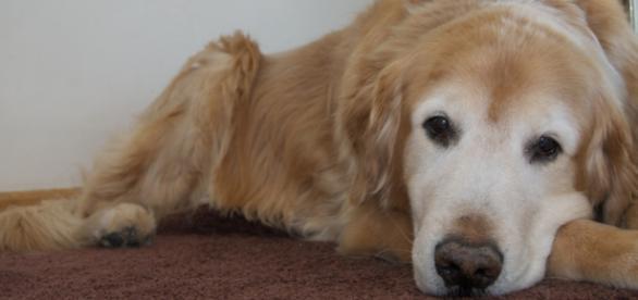 Perros ayudan a víctimas en momentos traumáticos