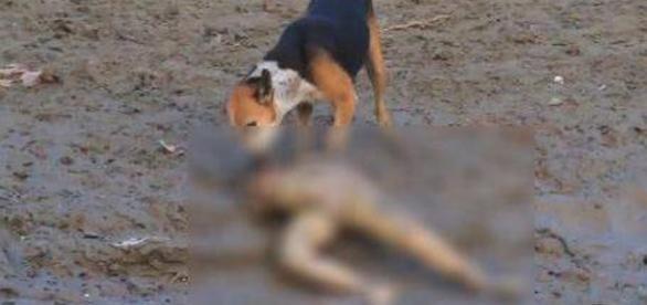 Cadavrul unei femei a fost gasit pe plaja