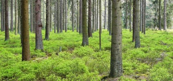 Zasoby lasów są ważne krajobrazowo, ekologicznie..