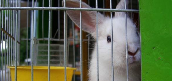 Efeitos toxicos testados em animais