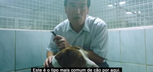 Ampara Animal/DM9 (Divulgação).