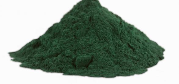 Spirulina, alga bogata w białko