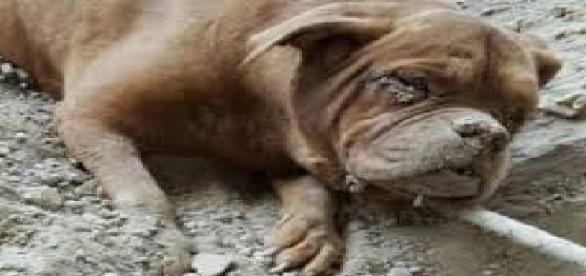 Câine îngropat de viu de stăpânul său