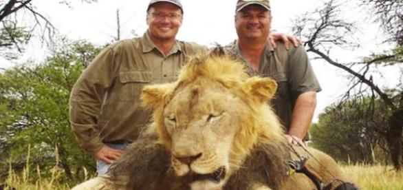 Leão Cecil e seu covarde executor