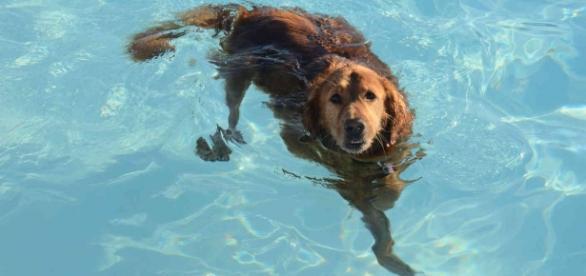 Cão tentou o salvamento sozinho.