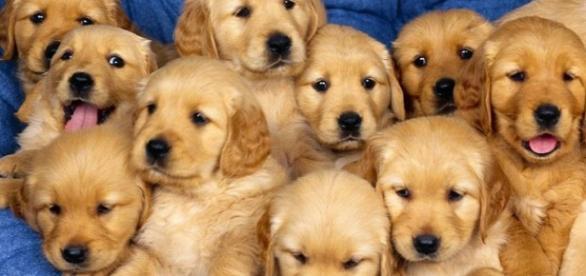 Campanha propõe exportar cães para China