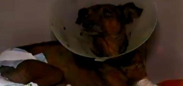 Foto: Record/Bahia - Após 11 dias cão veio a óbito