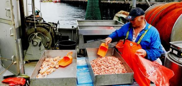 Pescador en Noruega. Foto: E.Redondo