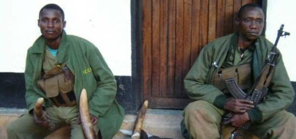 Cazadores furtivos de marfil (Rwanda)
