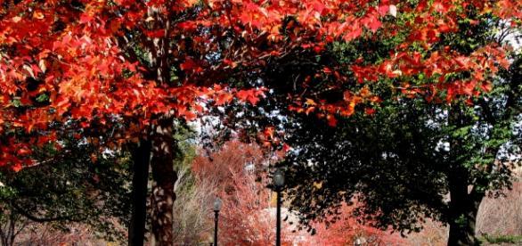 Parque Boston Common en todo su apogeo otoñal