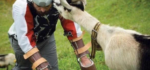 Homem resolve viver como cabra