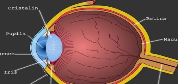 Ochiul - cel mai important organ al corpului uman