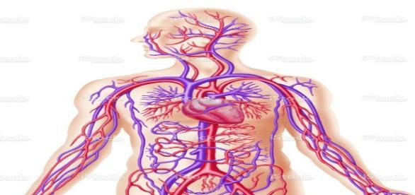 Cât sânge poate pierde organismul uman?