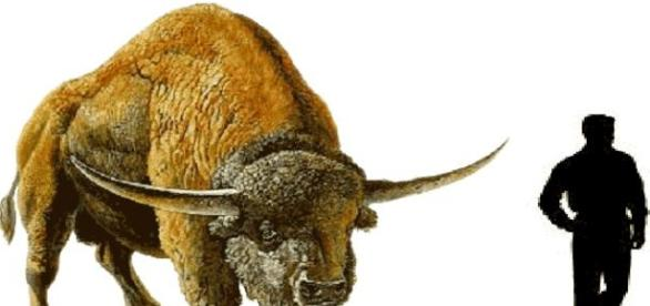 The prehistoric bison stood 8 feet tall.