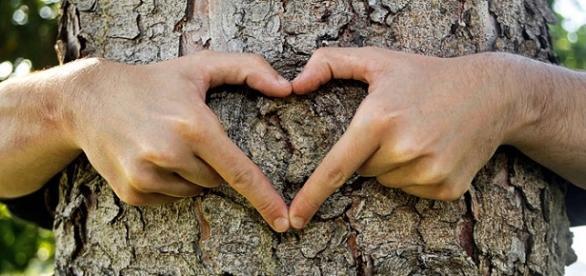 Mejora tu salud física y mental abrazando árboles