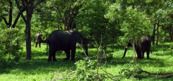 Elephants in Chobe National Park. By J Flowers