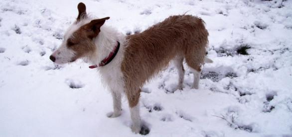 """Mi perro """"Dingo"""" en plena sierra"""